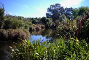 nature_wetland
